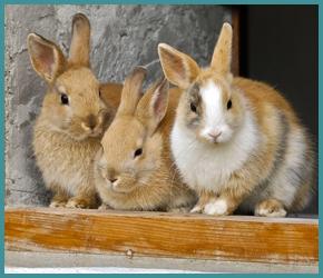 Kaninchenfutter Holstenstolz Futter aus eigener HerstellungStröh Hobbersdorfer Mühle